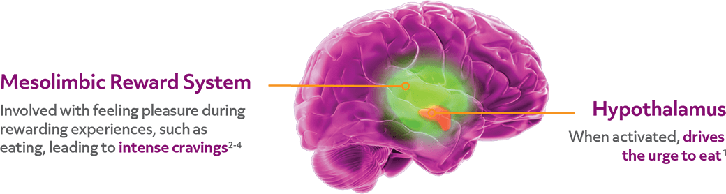 Hypothalamus drives the urge to eat, mesolimbic reward center leads to intense cravings